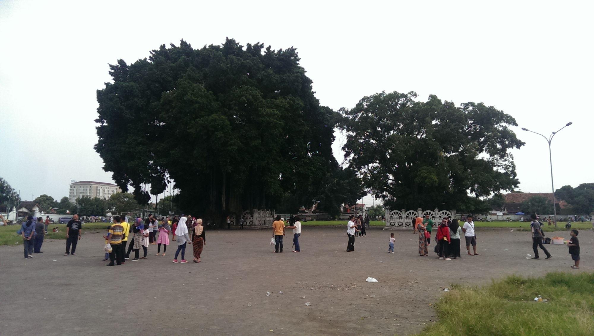 Things to do in Yogyakarta City Guide Twin Beringin Trees Indonesia