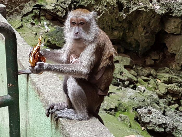 kuala lumpur city guide Things to do Kuala Lumpur Malaysia Batu Caves3