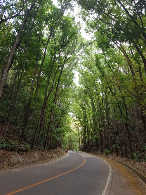 top things to do philippines bohol man made forest